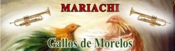 Mariachi Gallos de Morelos